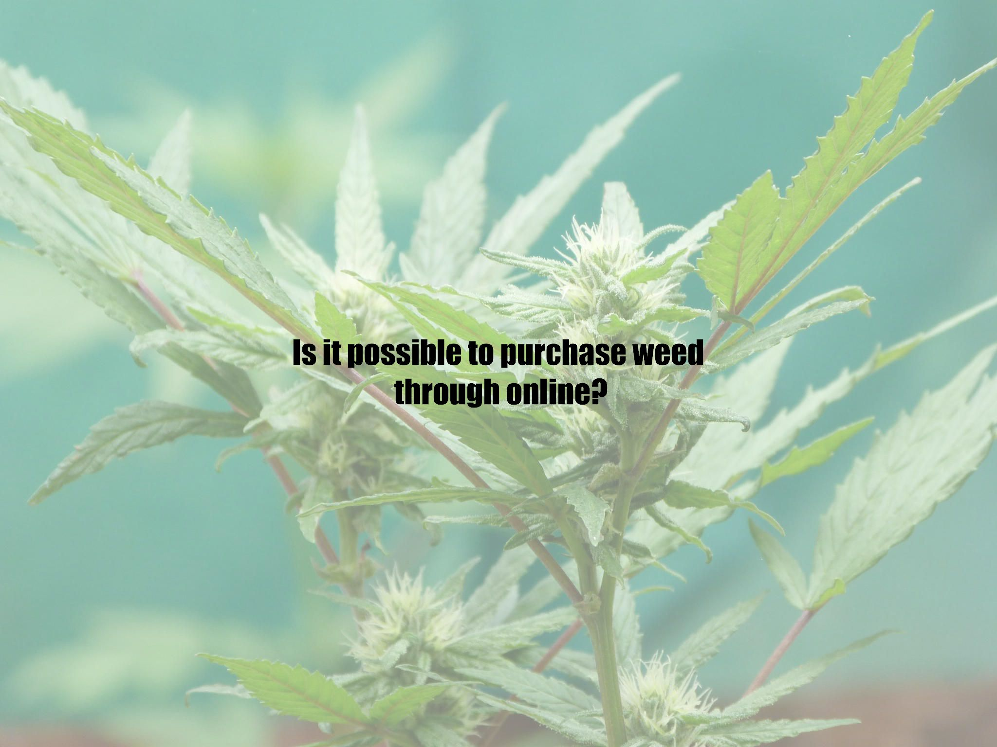 Is it possible to purchase weed through online?